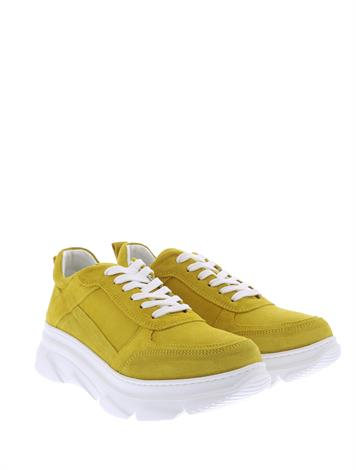 Hip D1890  Yellow Suede